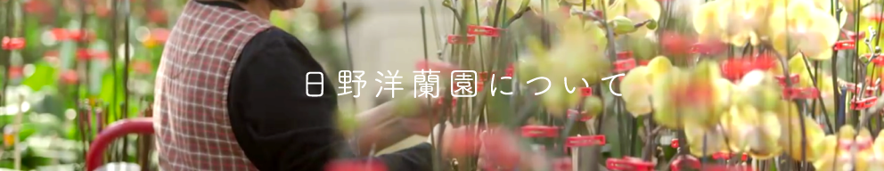 日野洋蘭園について